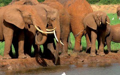 ElephantsAtRiver